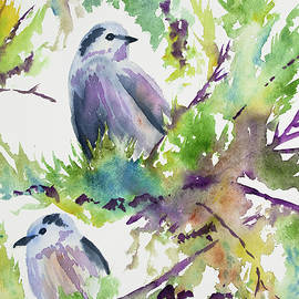 Cascade Colors - Original Watercolor - Gray Jays in the Moss-Covered Pines
