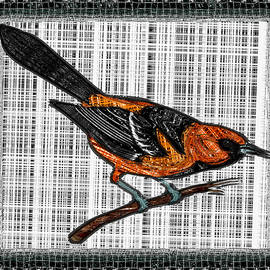Mario Carini - Oriole on a Branch