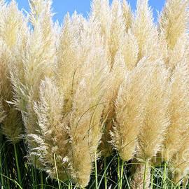 Tracy Hall - Ornament Grasses