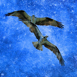 Steve McKinzie - Osprey Night Flight