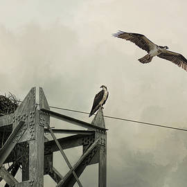 Jai Johnson - Ospreys At Pickwick