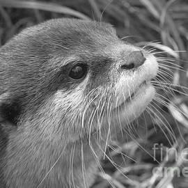 Mickey At Rawshutterbug - Otter Close Up BW