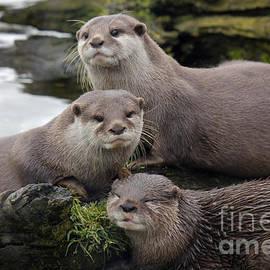 John Wallace - Otter Trio