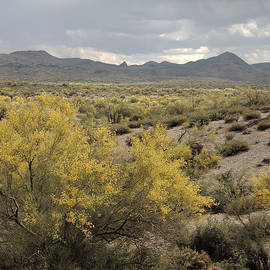 Gordon Beck - Overcast Desert
