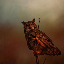 Jai Johnson - Owl In The Marsh