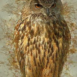 Jack Zulli - Owl