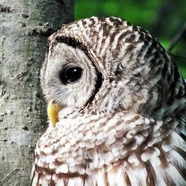 Christy Ricafrente - Owl Profile