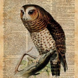 Jacob Kuch - Owl Vintage Illustration Over Old Encyclopedia Page