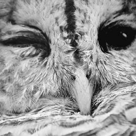 Sarah Labadie - Owl Wink