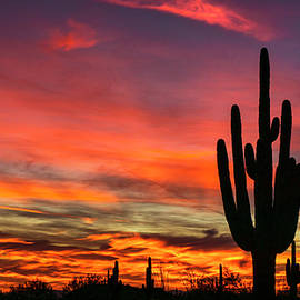 Saija Lehtonen - Paint The Sonoran Skies With Color