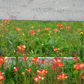 Paintbrushes and Fence Posts