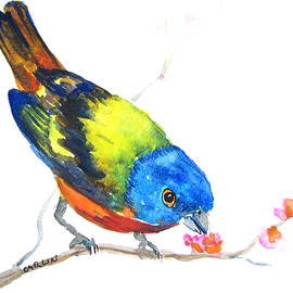 Carlin Blahnik - Painted Bunting and Cherry Blossoms