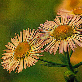 Dave Bosse - Painted Daisies 2