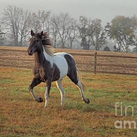 Randy Matthews - Painted Pony