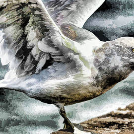 Geraldine Scull - Painted seagull