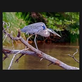 Dr Bob Johnston - Painting Blue Heron Oak Creek