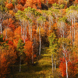Vishwanath Bhat - Palisades Autumn Glory in Swan Valley Idaho