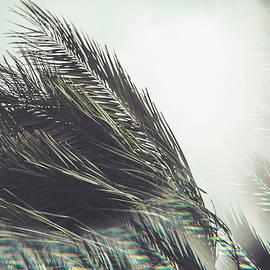 Eduardo Vilela - Palm Iris