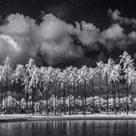 Sean Davey - Palm Lagoon