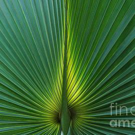 Marcin Rogozinski - Palm Leaf 2