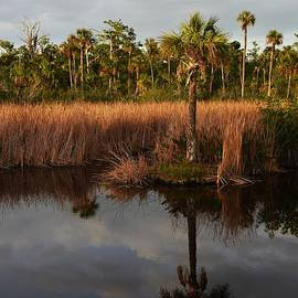 Don Columbus - Palm Reflection