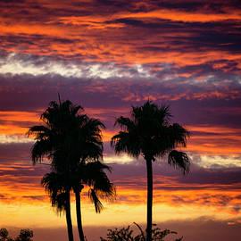 Saija Lehtonen - Palm Silhouette Sunset