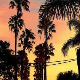 Kaye Menner - Palm Sunset Silhouette by Kaye Menner
