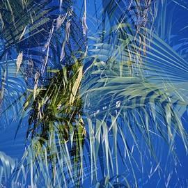 Linda Brody - Palm Tree Abstract III