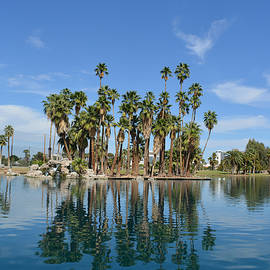 Aimee L Maher Photography and Art - Palm Tree Reflections