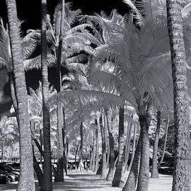 Palm Walkway - Sean Davey