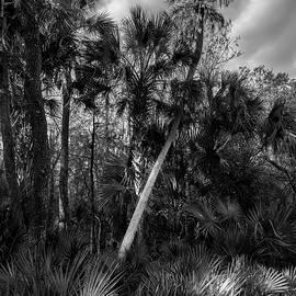 Marvin Spates - Palms and Palmettos