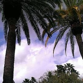 Krystal Whitney - Palms