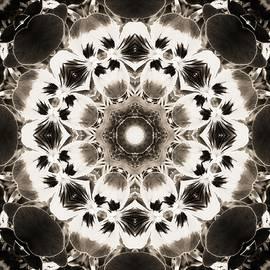 Nancy Pauling - Pansy Kaleidoscope