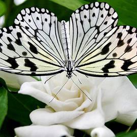 Kristin Elmquist - Paperkite on Gardenia