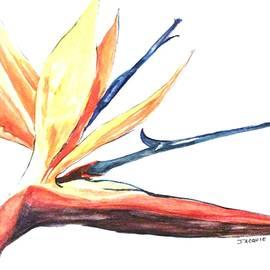 Jacquie King - Paradise Sketch