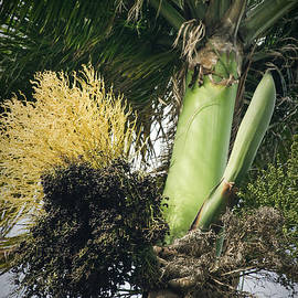 Sharon Mau - Paradiso Tropicale
