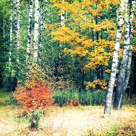 Alexey Stiop - Russian fall scene