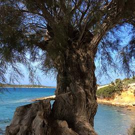 Colette V Hera  Guggenheim  - Paros Island Geeece