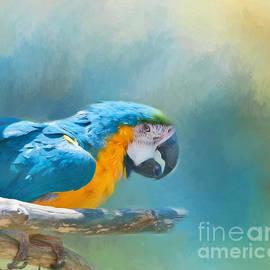 Kathleen Rinker - Parrot