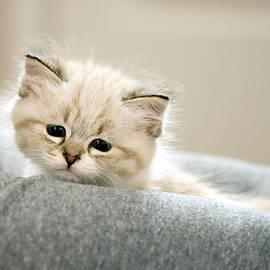 Jody Gaisford - Parsnip the Kitten