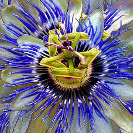 Michele  Avanti - Passion Flower