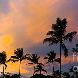 Pastel Palms - Sean Davey