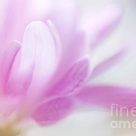 LHJB Photography - Pastel petals