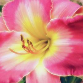 MTBobbins Photography - Pastel Silk - Daylily