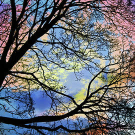 Shawna Rowe - Pastel Sunset Silhouette