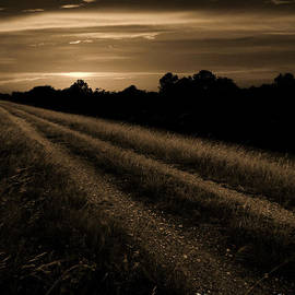 Nathan Little - Path at Sunset Sepia
