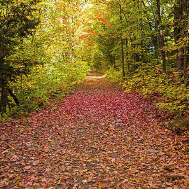 Alana Ranney - Path Covered in Leaves