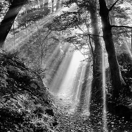 Peter Acs - Path to the light
