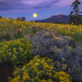 Peter Coskun - Payoff