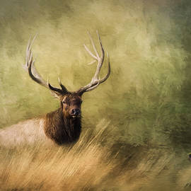 Jordan Blackstone - Peace Is A Journey - Wildlife Art
